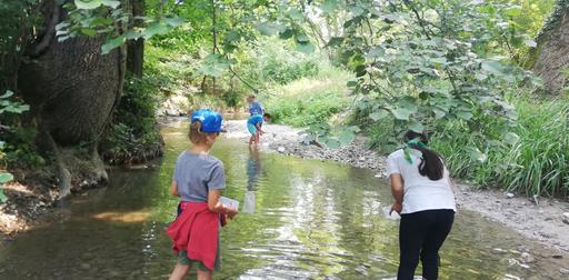 Animaux et plantes de la rivière 2020