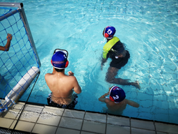 Natation et waterpolo